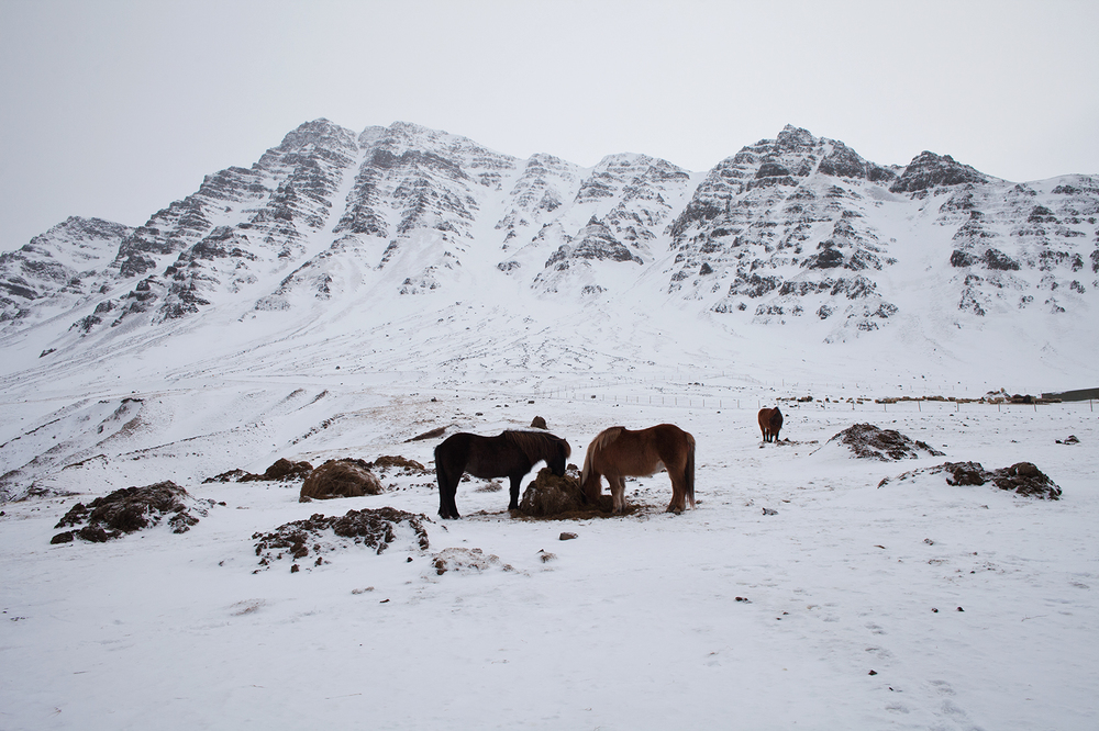 "66°11'11.3""N 18°57'03.2""W , 01/02/2015, 1513 Grazers, old Siglufjörður road, Iceland"