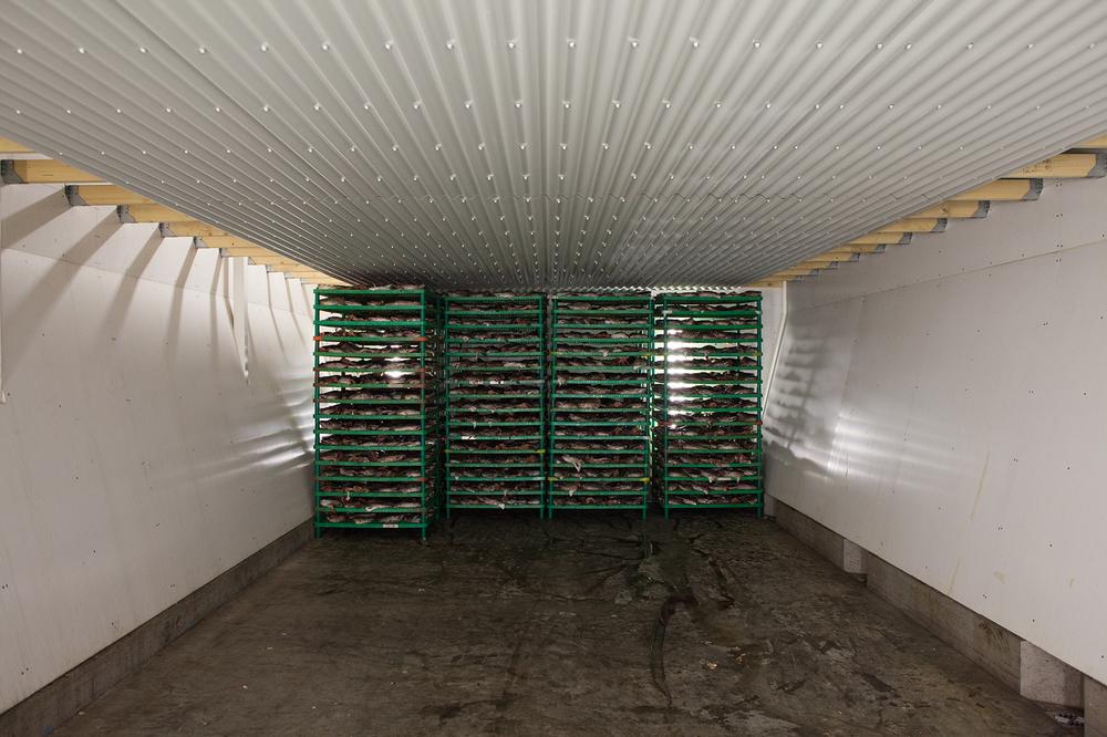 "66°04'29.3""N 18°38'31.8""W ,  19/02/2015, 0809 Drying tunnel, Norlandia fish factory,  Ólafsfjörður,  Iceland"