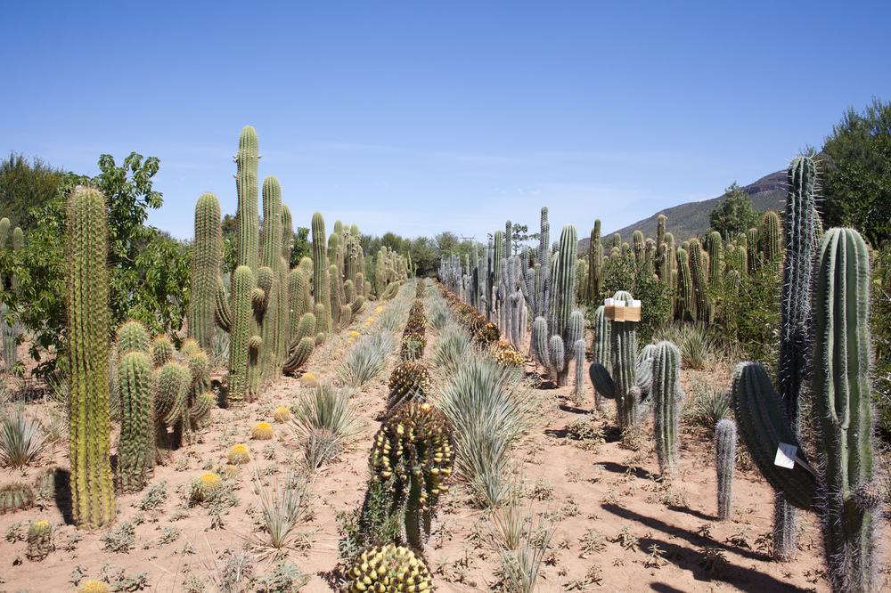 "32°15'15.0""S 24°32'29.1""E ,  18/03/2015, 1234 Cactus lines, Obesa nursery, Graaff-Reinet, Eastern Cape, South Africa"