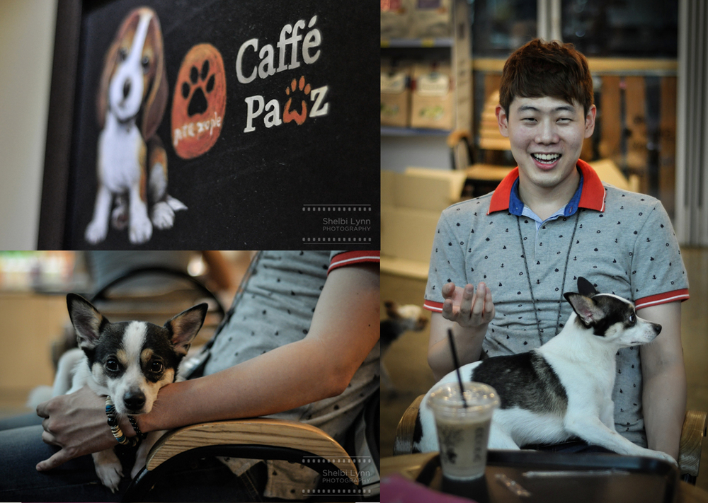 Puppy Cafe! Looks like Jake made a new friend...