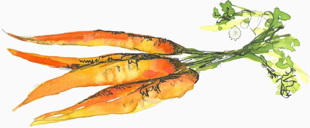 Carrot divider_L.jpg