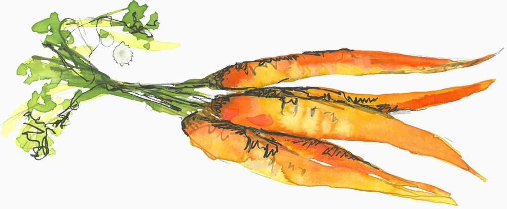 Carrot divider_R.jpg