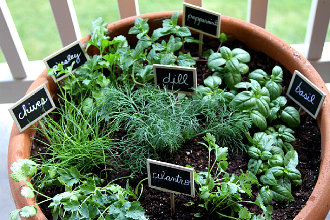 Attrayant 6 Easy To Grow Herbs To Plant Now
