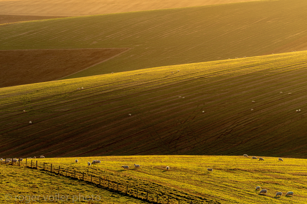 South Downs, West Sussex England