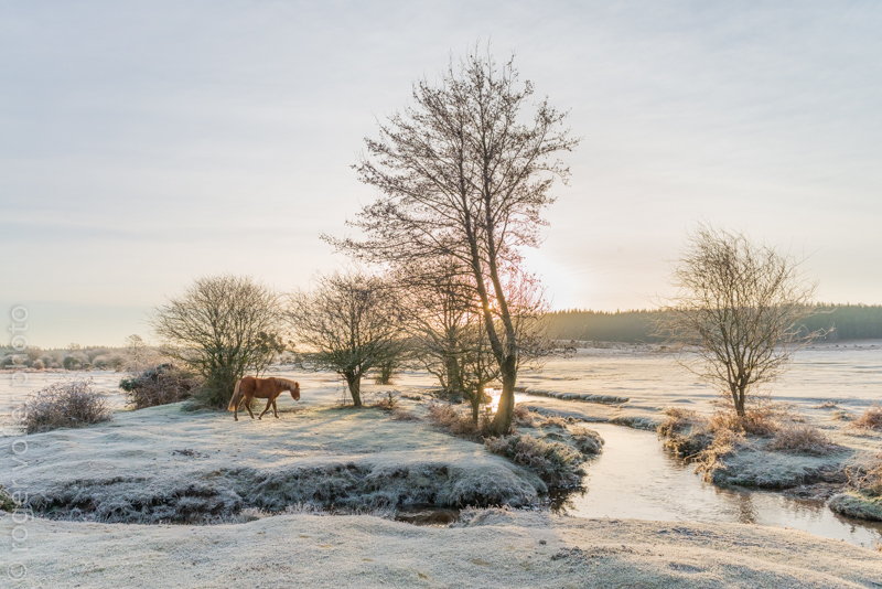 First favorite image of the year, New Forest wilderness