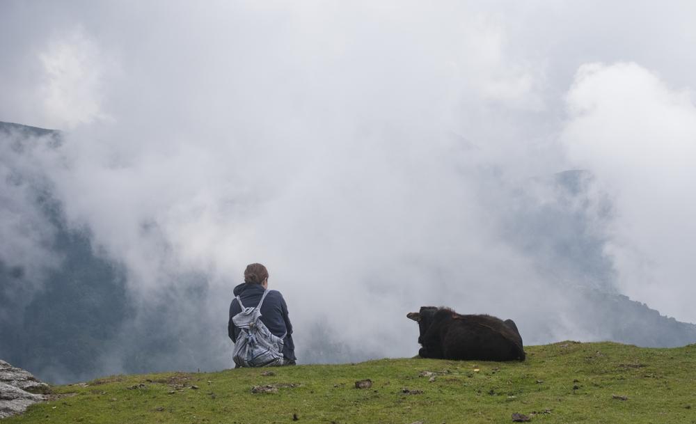 maya and cow.jpg