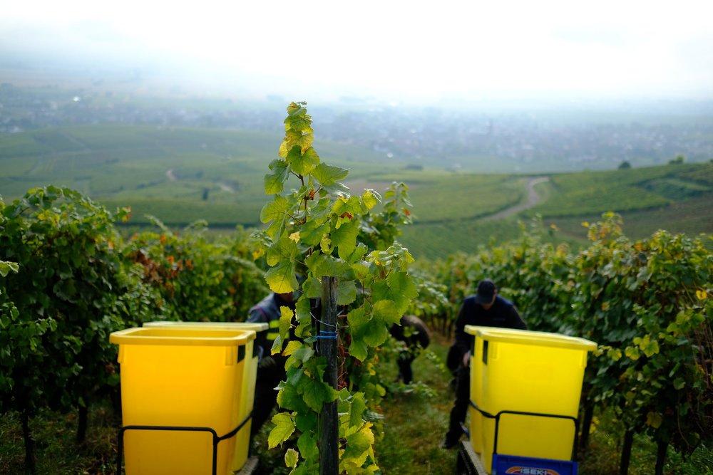 fotoreportage-wijn produceren-Vignoble des 2 lunes-Bosman Wijnkopers-458.jpg