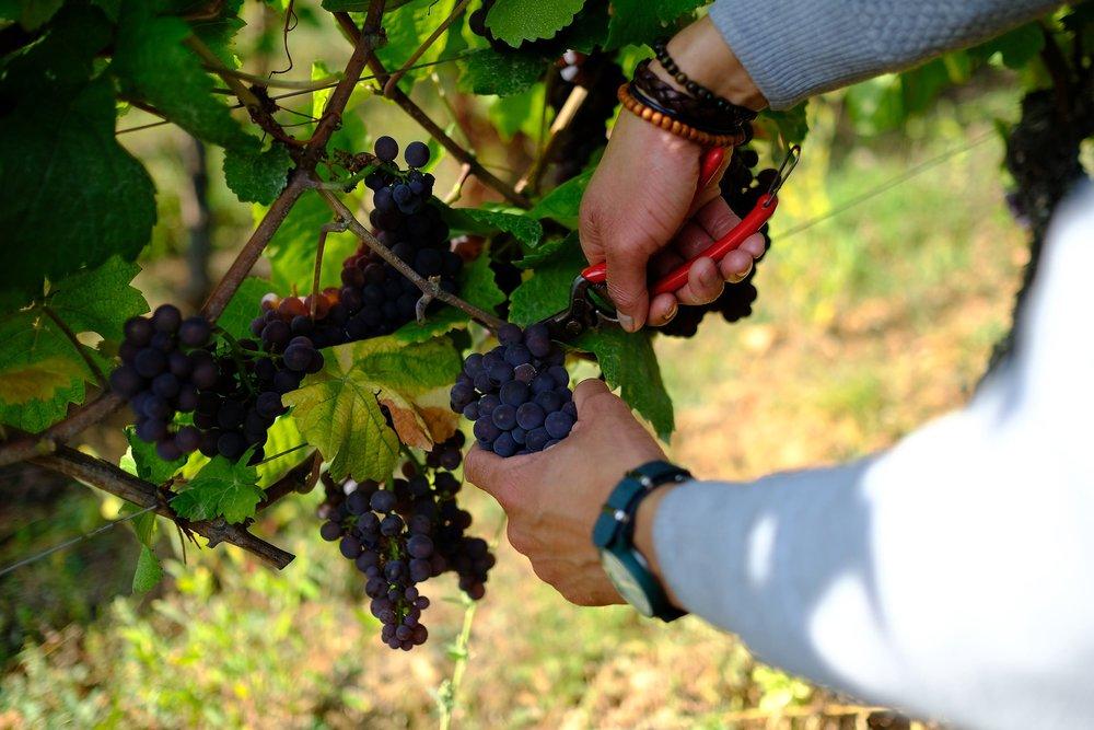 fotoreportage-wijn produceren-Vignoble des 2 lunes-Bosman Wijnkopers-461.jpg