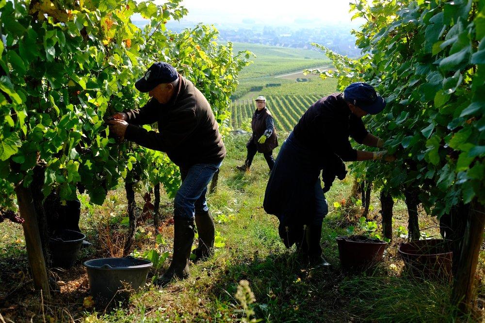 fotoreportage-wijn produceren-Vignoble des 2 lunes-Bosman Wijnkopers-463.jpg