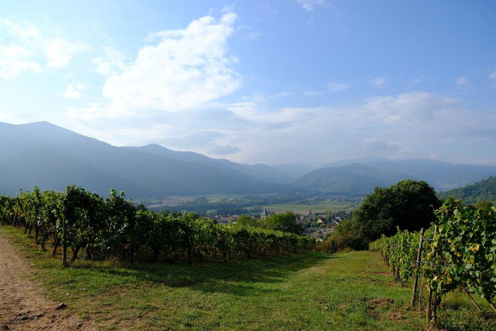 fotoreportage-wijn produceren-Vignoble des 2 lunes-Bosman Wijnkopers-472.jpg