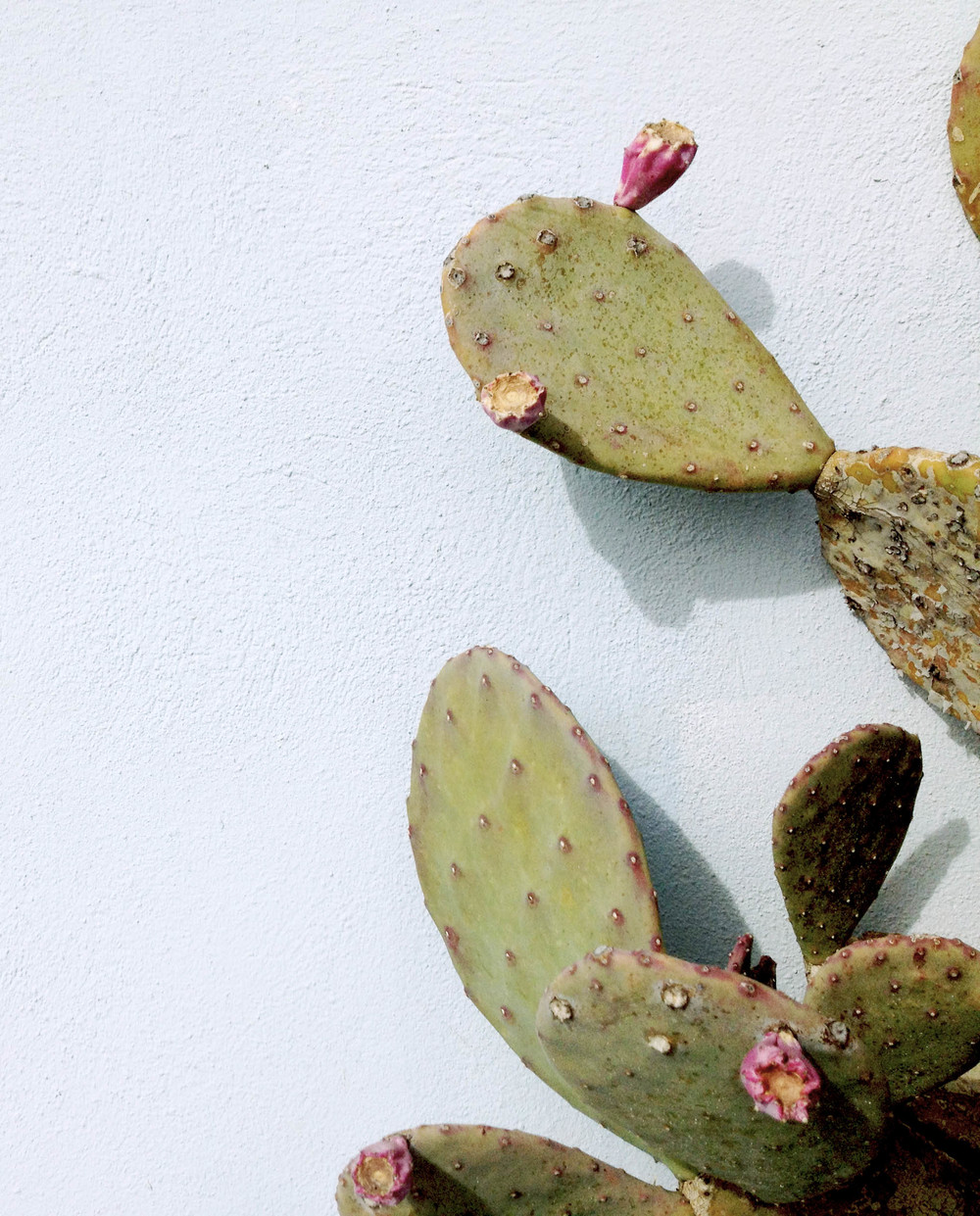 Marfa cactus.jpg