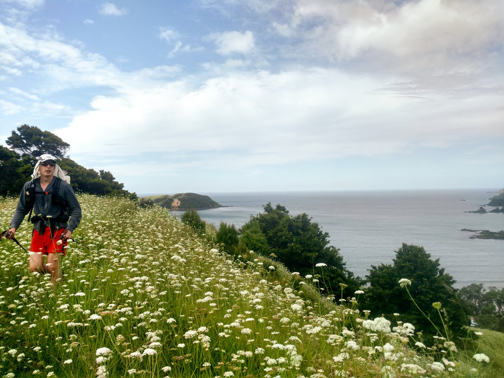 Jonathan tramping through a field of flowers north of Matapouri.  photo/ Molly