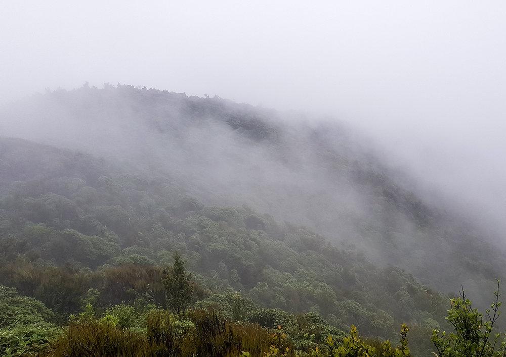 Heavy mist on day #1 in the Tararuas  photo/ Jonathan