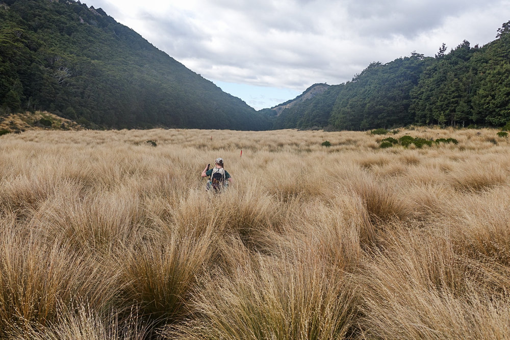 Tussock that goes on forever  photo/ Jonathan