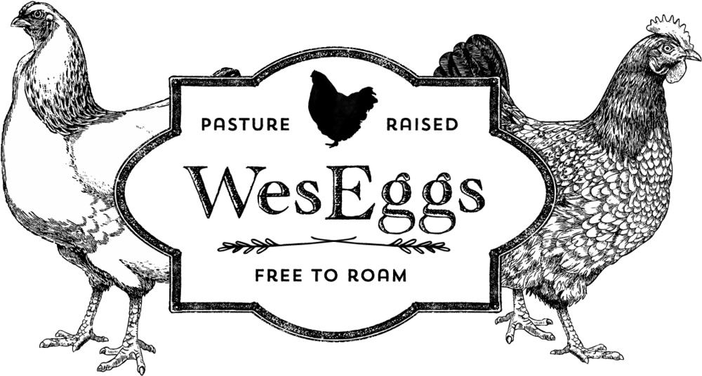 passionfolk-marketing-wes-eggs.png