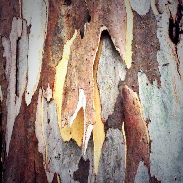Loved the patterns in the tree bark