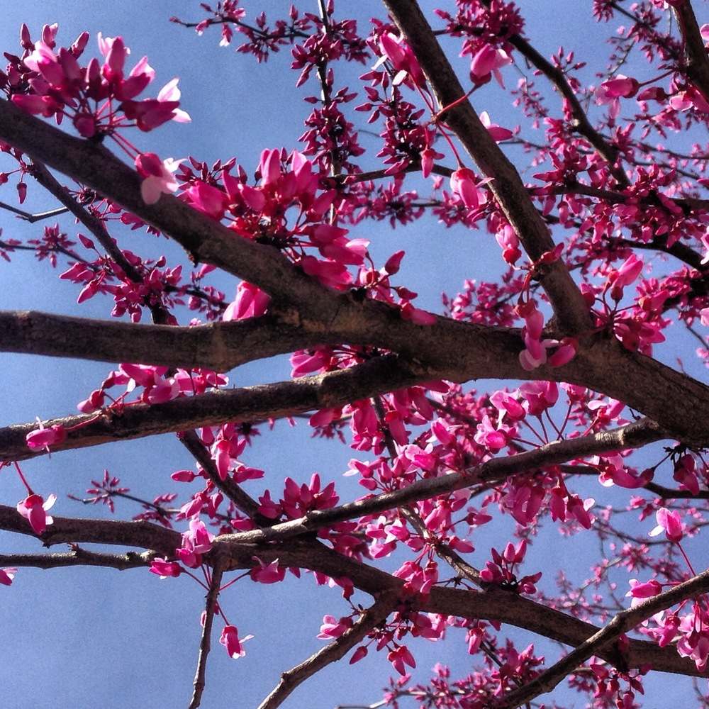Pristine spring blooms