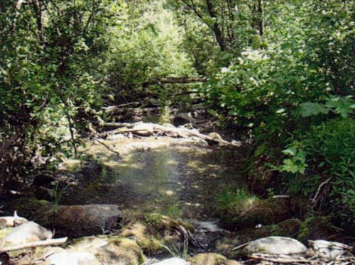 Habitat essential to Rainbow Trout (click image to see larger version)  The series of step-pools, gravel and natural cover provide the type of habitat essential for spawning and juvenile Rainbow trout.