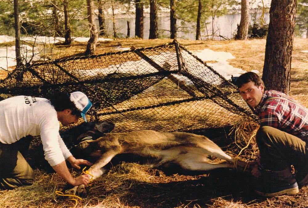 Mule-Deer-05.jpg