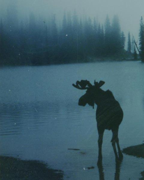 Moose2-smaller.jpg