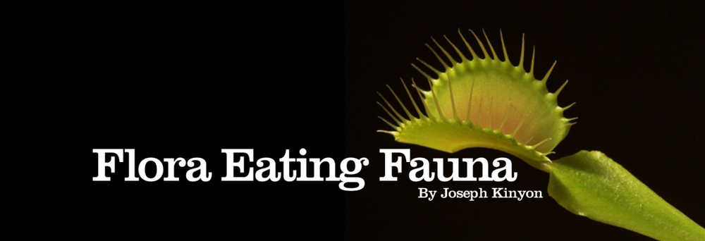 Read Flora Eating Fauna on Know Journal