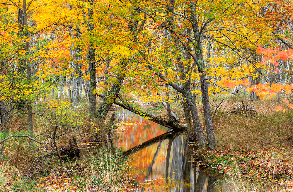 Arcadia-river-Acadia-rio.jpg