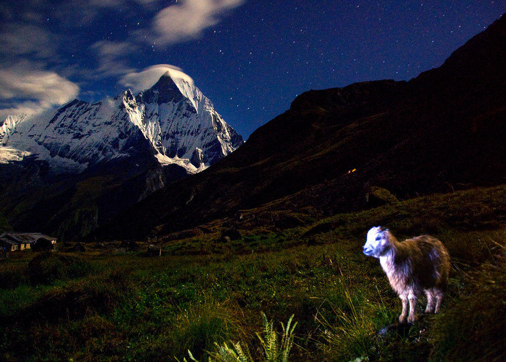 goat-at-night-nocturna-cabrita-4.jpg