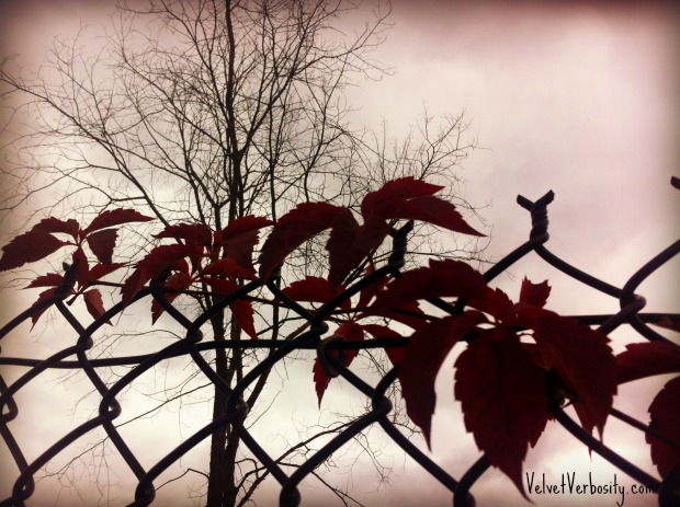 Red Leaves Chain Link Fence