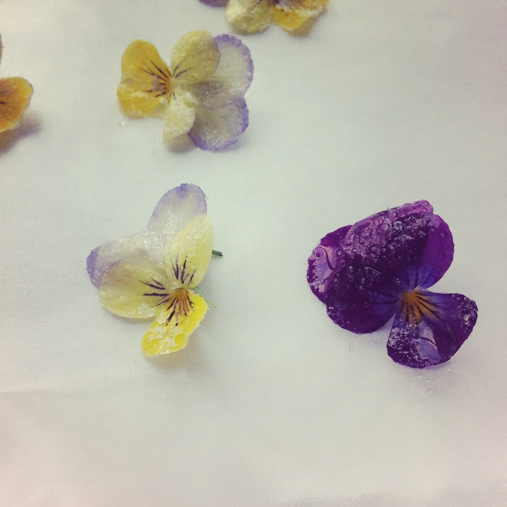 Candied Violas