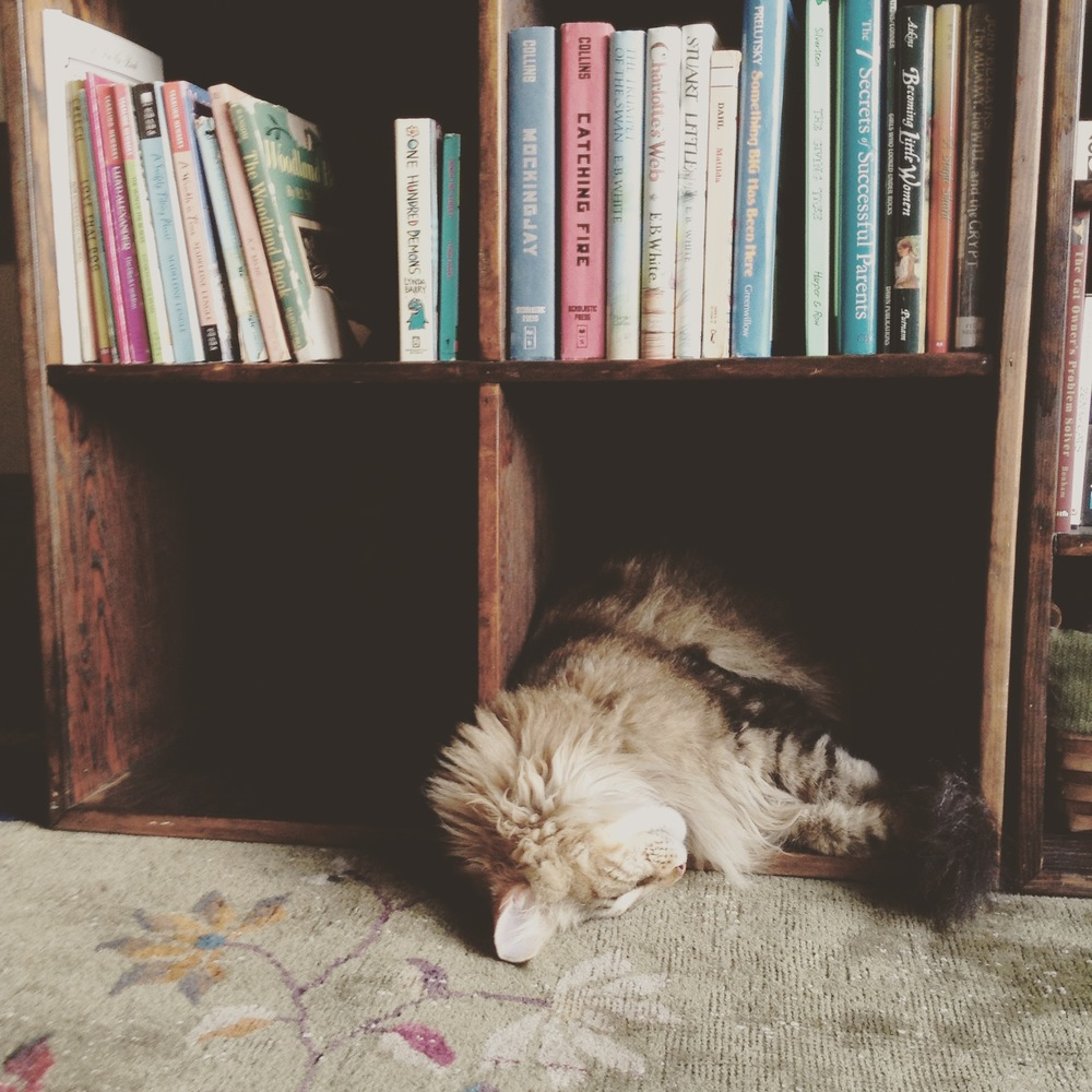 Maine Coon and Books
