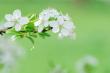 istockphoto_5868701-blossom-detail.jpg