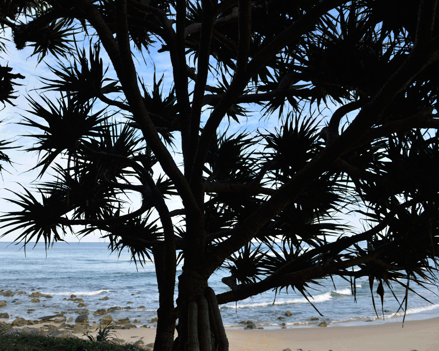 'Palm' © Naida Ginnane 2017 Nikon D800, 24-70mm lens.