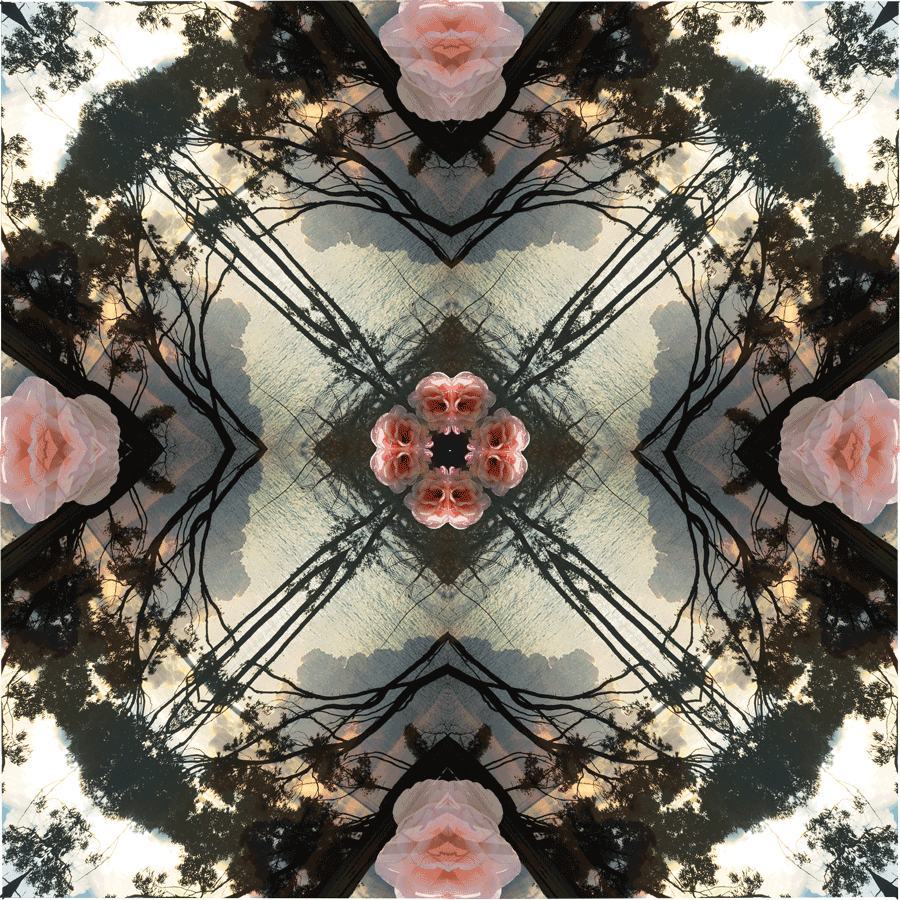 Hyamstreesand-rose.png