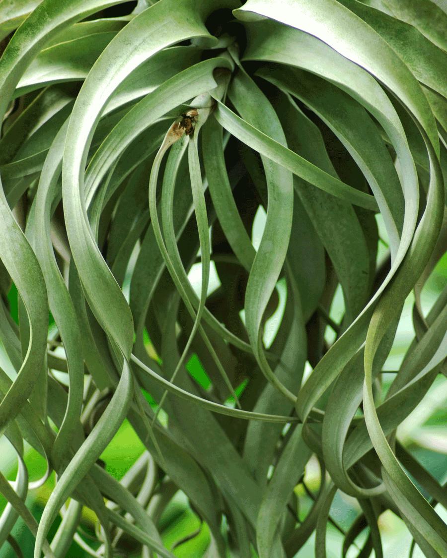 'Green Rhythm' © Naida Ginnane 2018 Nikon D800, 24-70mm lens. f/4.2, 1/80, ISO 400