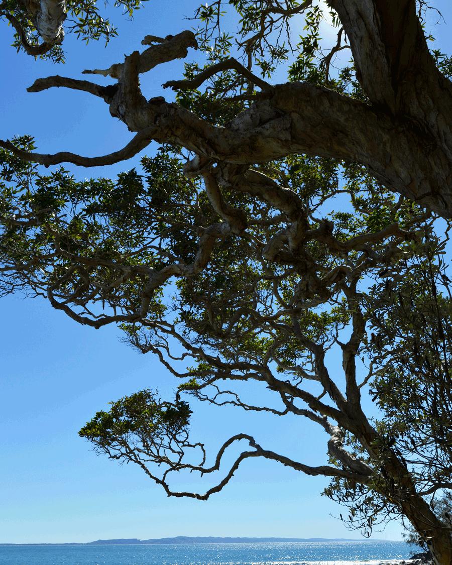 'Tree Shape' © Naida Ginnane 2017 Nikon D800, 24-70mm lens. f/16.0, 1/250 , ISO 100