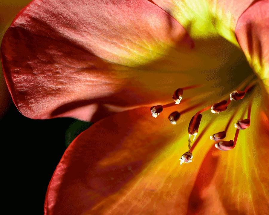 'Stamens' © Naida Ginnane 2016, Nikon D800 105mm lens, 1/200, f/9, ISO 100.