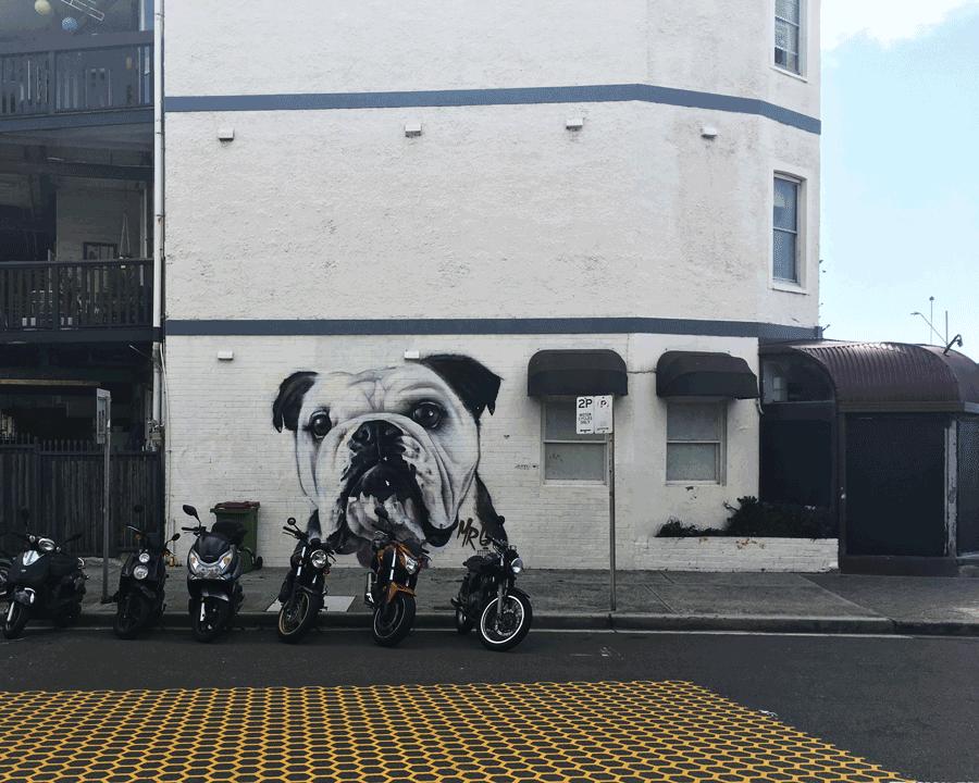 'Bulldog' © Naida Ginnane 2018 iPhone X, f/2.2, 1/950 ISO 25
