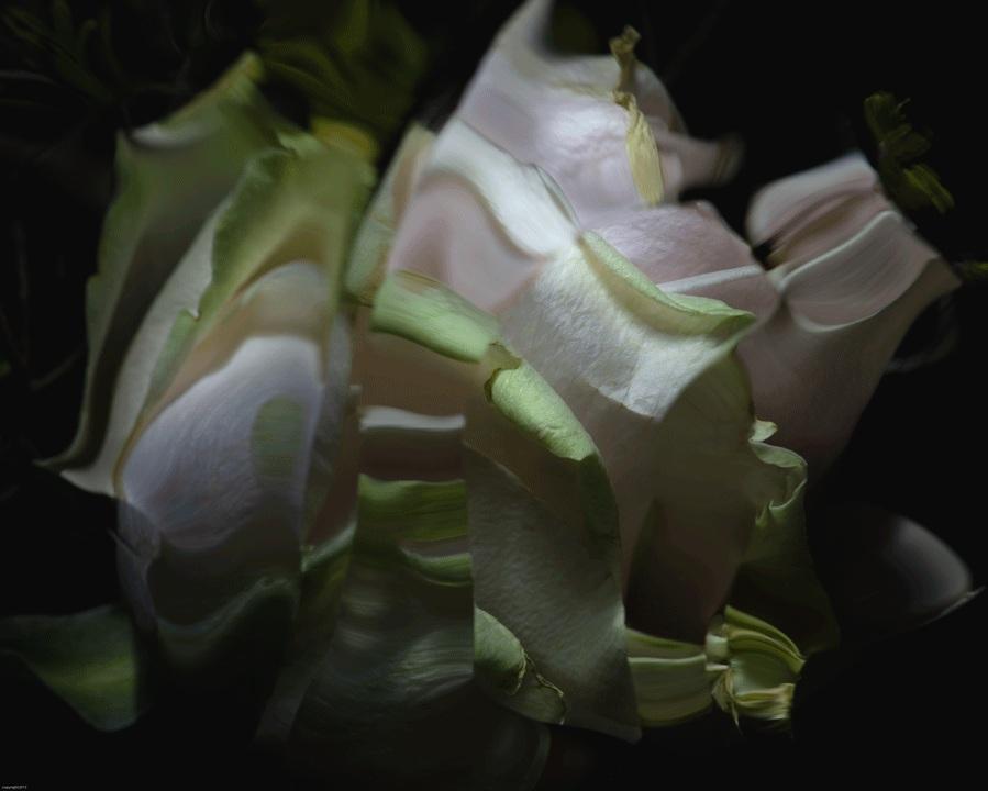 Dys-tortion No:15 © Naida Ginnane 2019