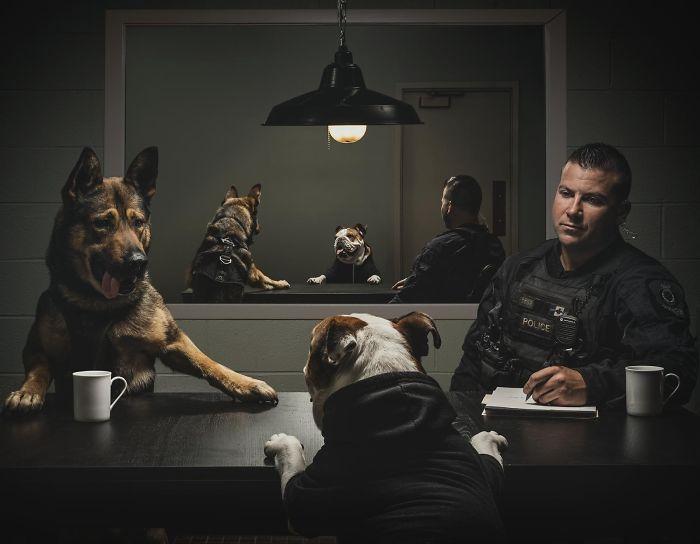 vancouver-police-department-charity-dog-calendar-2019-3-5bd16db14b763__700.jpg
