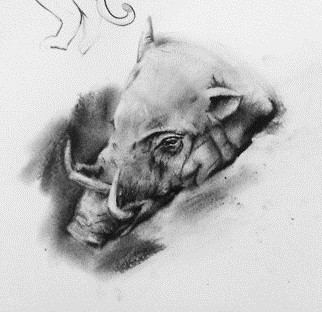 Babirusa Animal Study, 2012