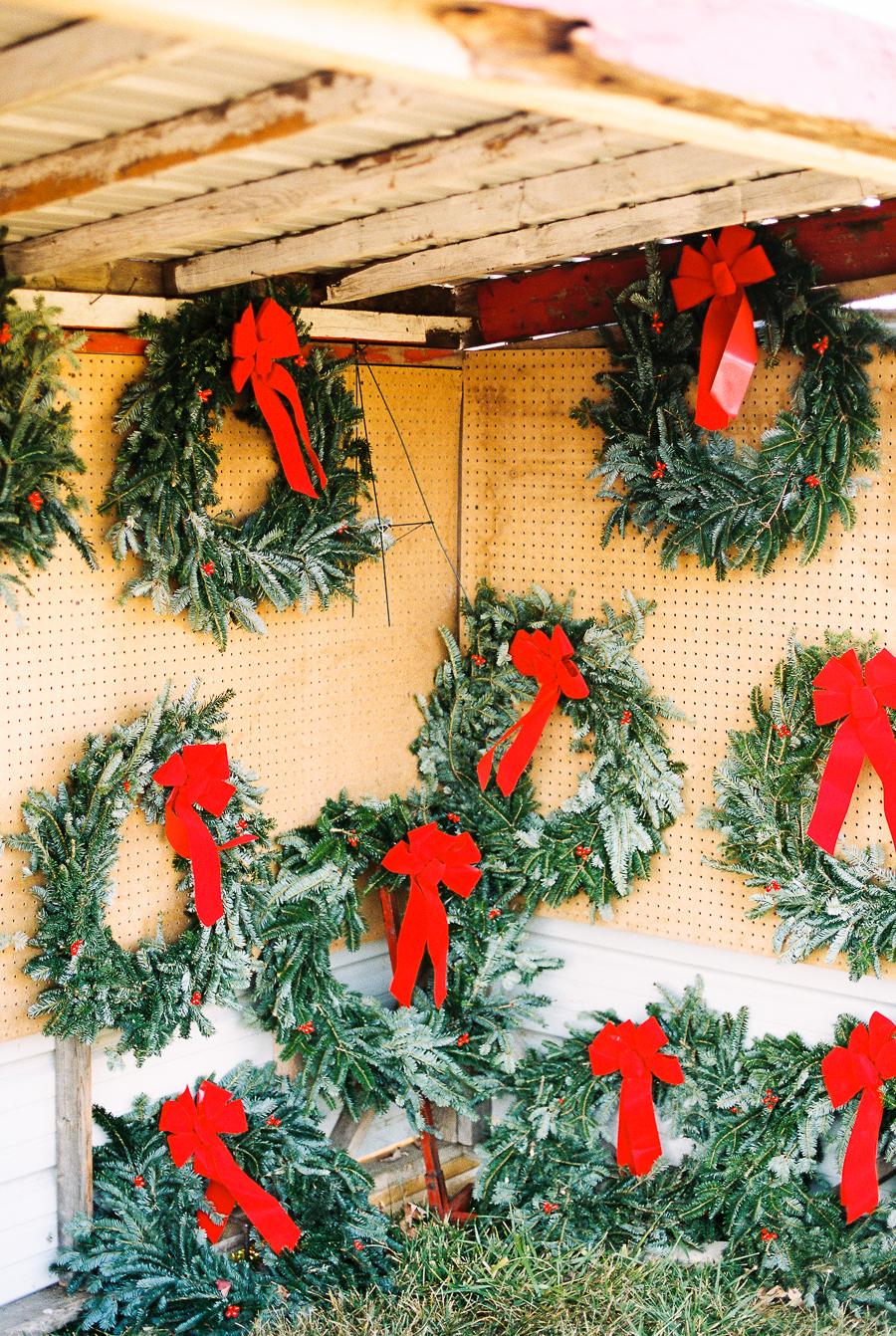 2016_11_27-ChristmasTree00048.jpg