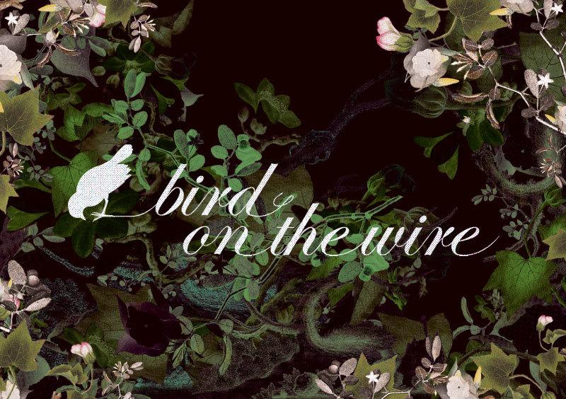 birdy-flyer-november-1