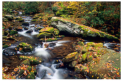 Great Smoky Mountains National Park: Fall Color
