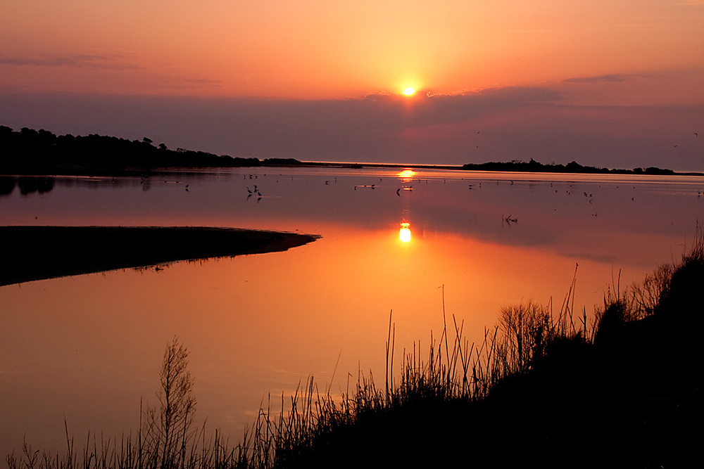 Chincoteague National Wildlife Refuge, VA