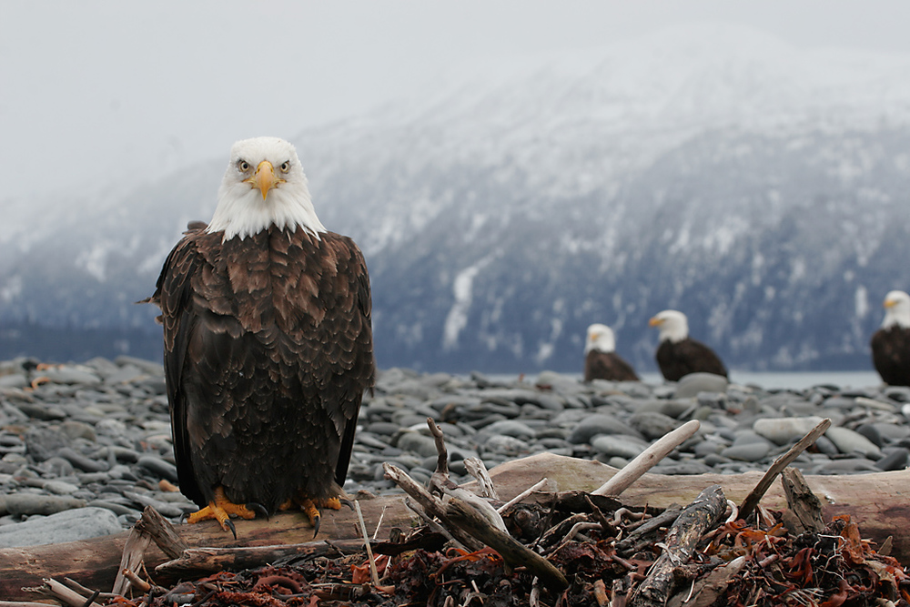 This photo of the Bald Eagles was taken around 20 below zero
