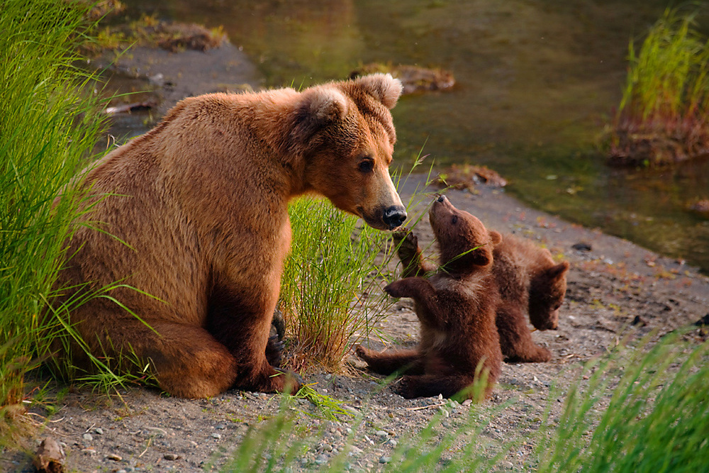Alaska_Bears_Photo_Tour_Workshop