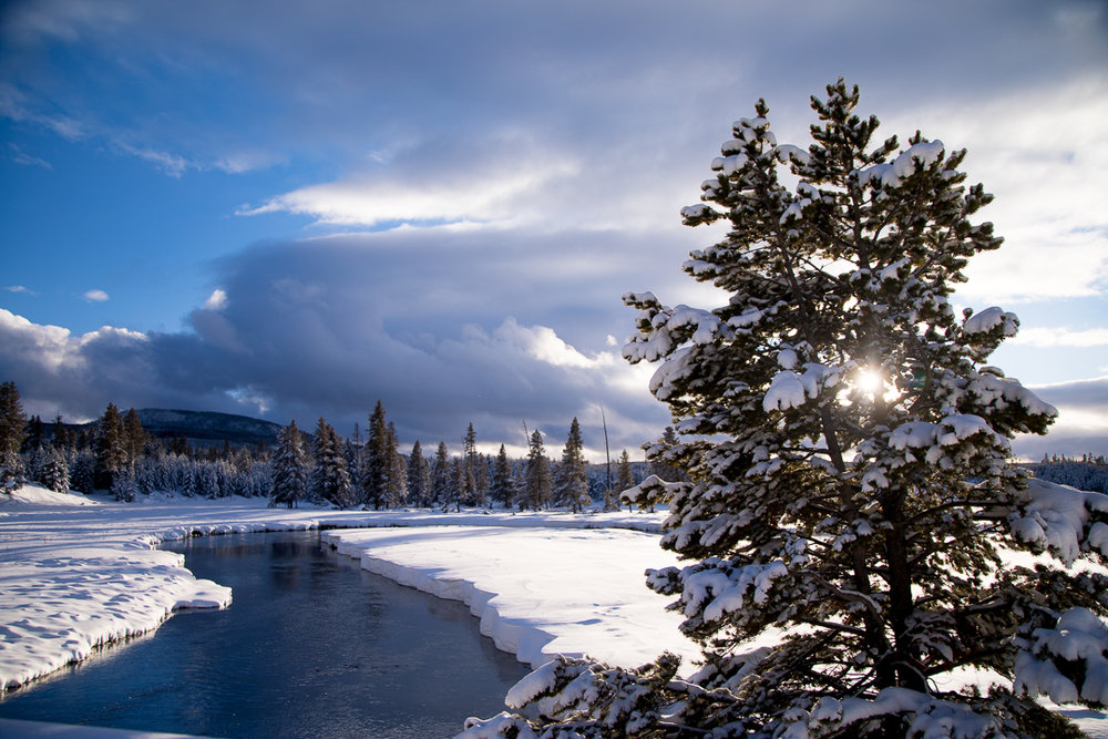 phYellowstone Winter Photo Tours and Workshops