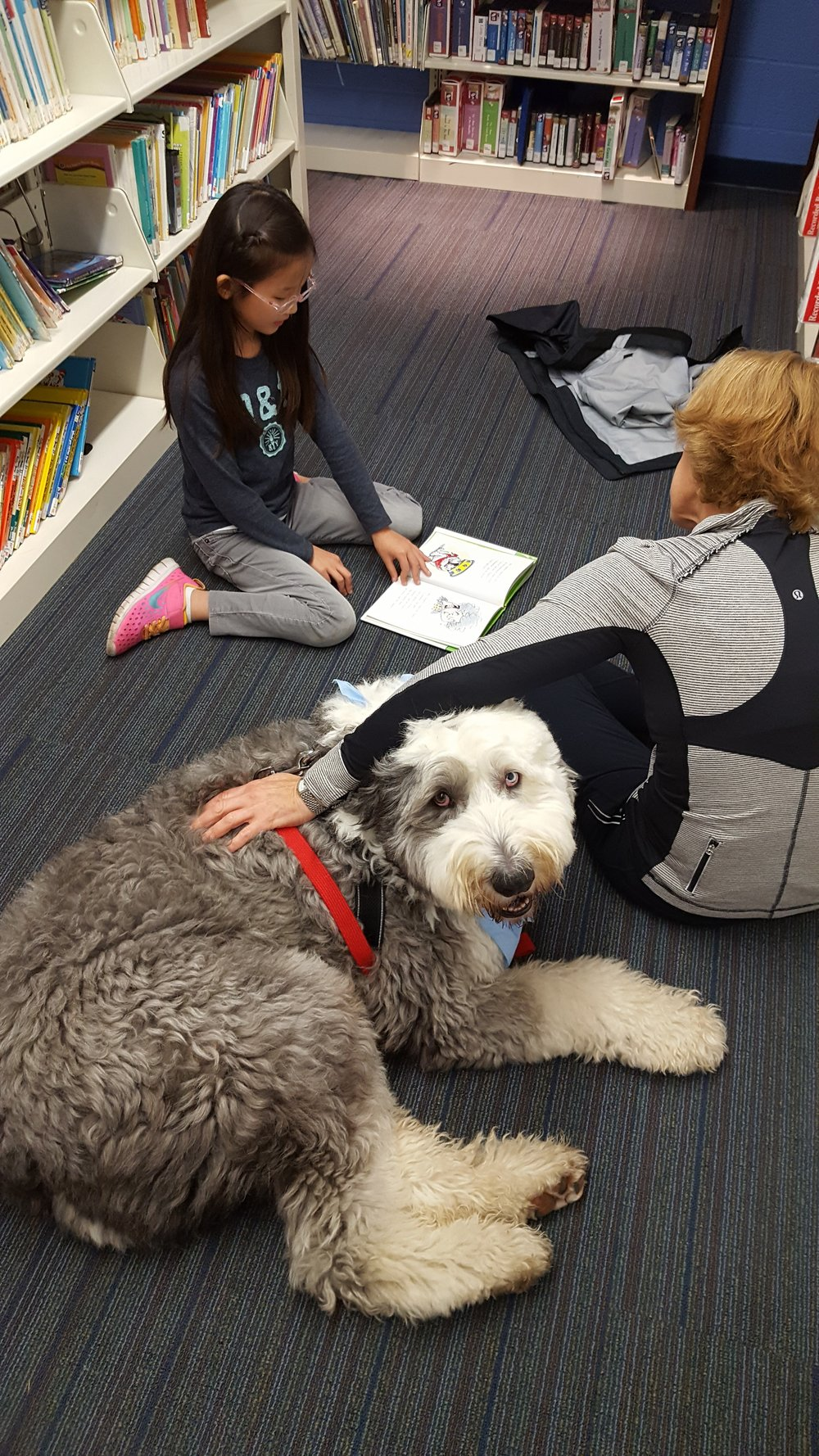 Sign up with READ to DOGS for a chance to read to Cooper or one of our other lovable canine volunteers.