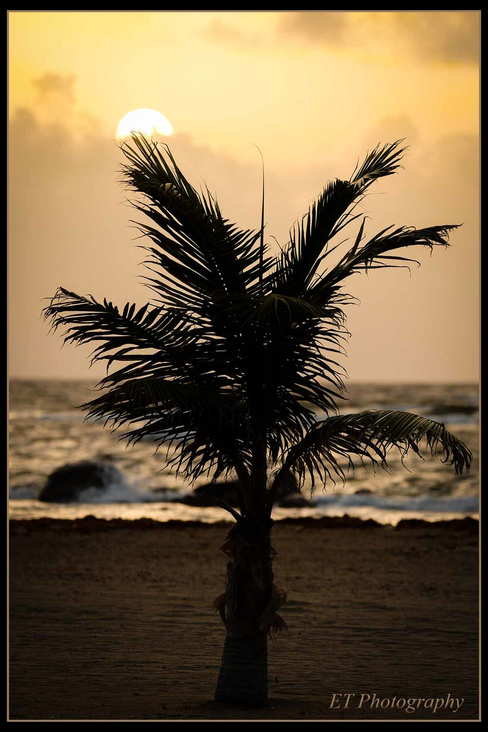 A single palm tree greeting the morning sun.
