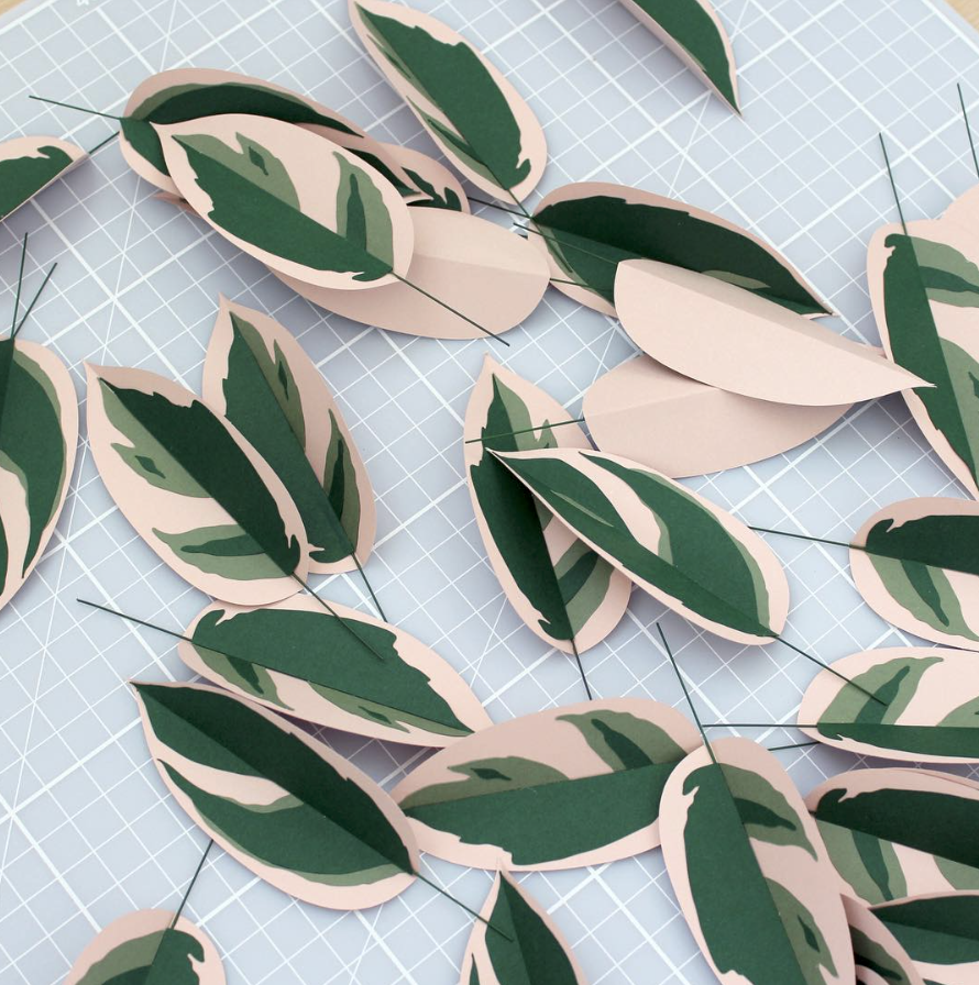 sarah matthews variegated rubber plant leaves.png